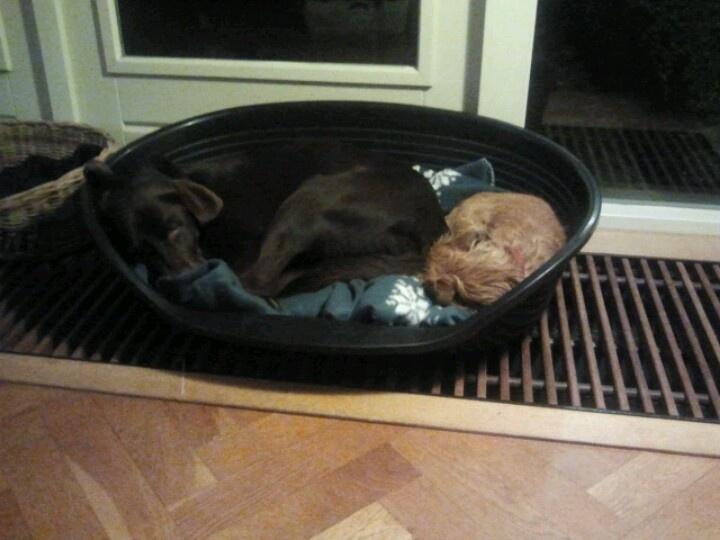 Geen slapende honden wakker maken...
