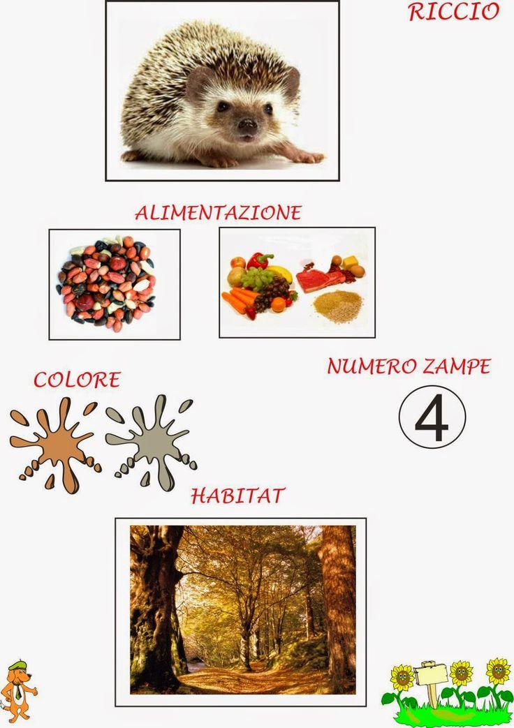 scheda+riccio.jpg (1129×1600)