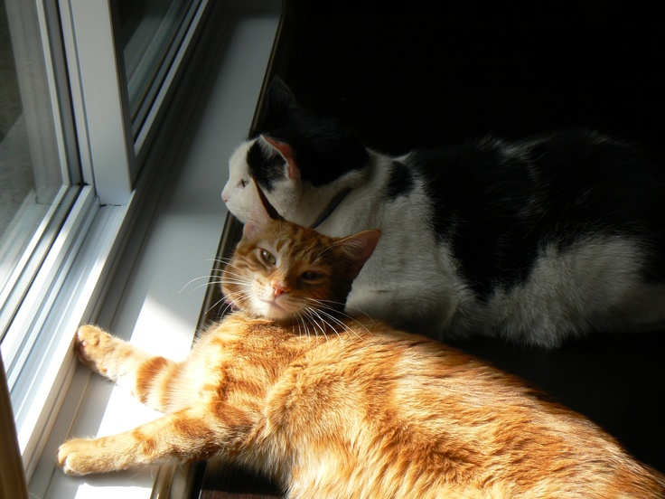 Miss Kitty and Eddie enyoying the sun coming in the window