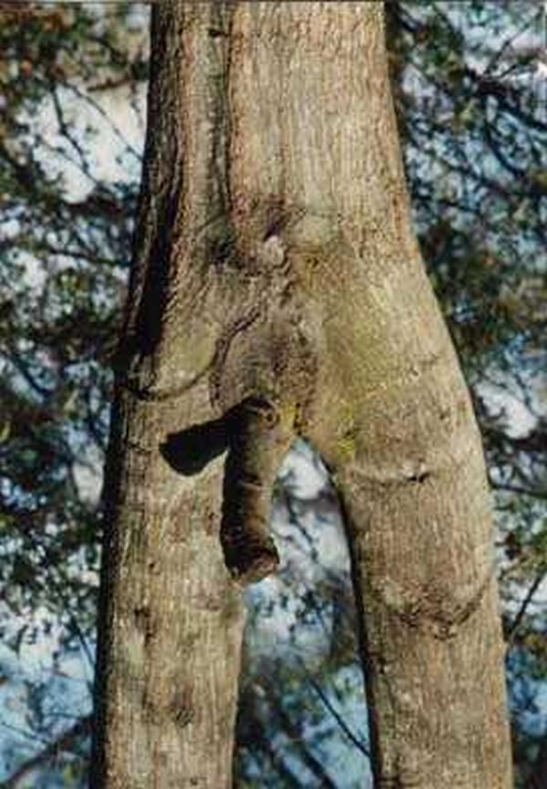 Tree a sex with