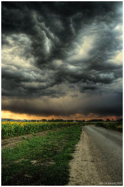 Sunflowers and Thunderstorms by John (kkart) at Deviant Art -- Magnificent!