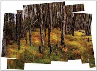 David Hockney landscape - Art Project for Kids