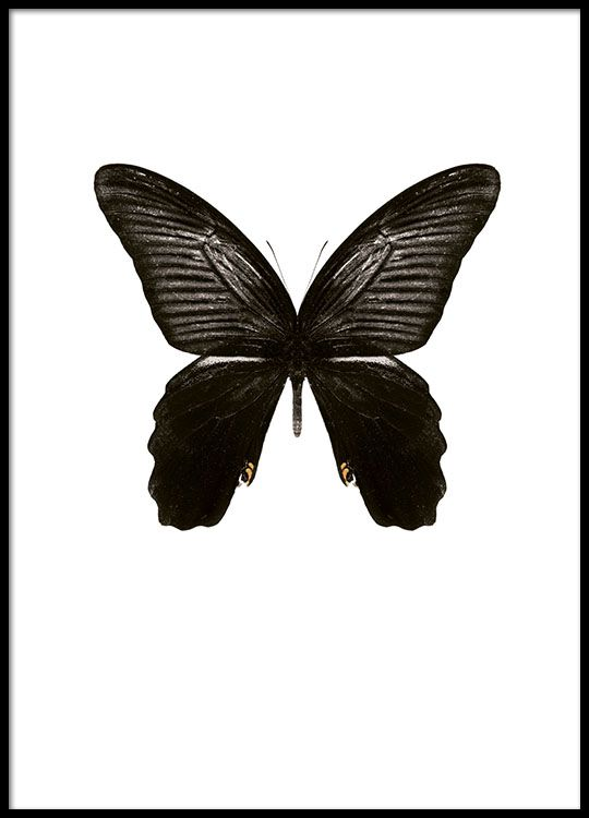 Stilig sommerfuglplakat med en mørk sommerfugl.