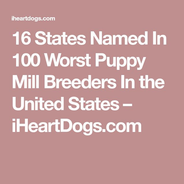 16 States Named In 100 Worst Puppy Mill Breeders In the United States – iHeartDogs.com