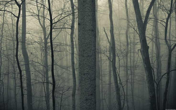 Nature trees forests woods trunk haze fog mist dark bark spooky ...