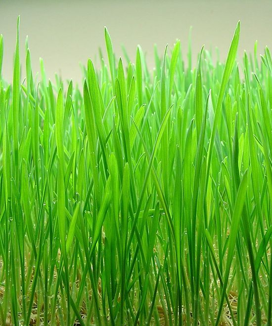 Benefits of Wheat Grass Juice – I