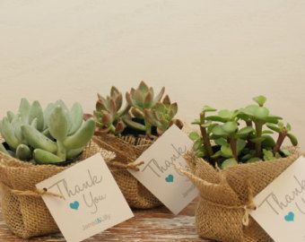 12 - DIY Succulent Favors - Thank You Tag - ANY COLOR - Succulent Favor kits, Succulent favor Tag, Succulent Wedding Favors