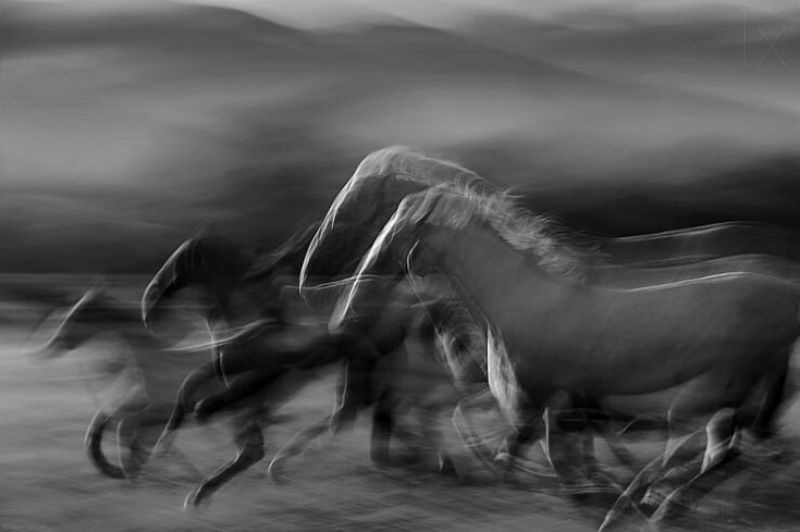 Slow shutter photography is exactly what you'd imagine it would be. By slowing the shutter speed of your camera you capture light over a longer period of time, this technique creates images like the ones taken by Milan Malovrh below. This particular collection is of some beautiful galloping horses and the finished pieces are as surreal and dreamlike as you were thinking.