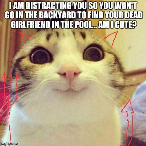 Birthday Cat Meme Generator: 25+ Best Ideas About Cat Meme Generator On Pinterest