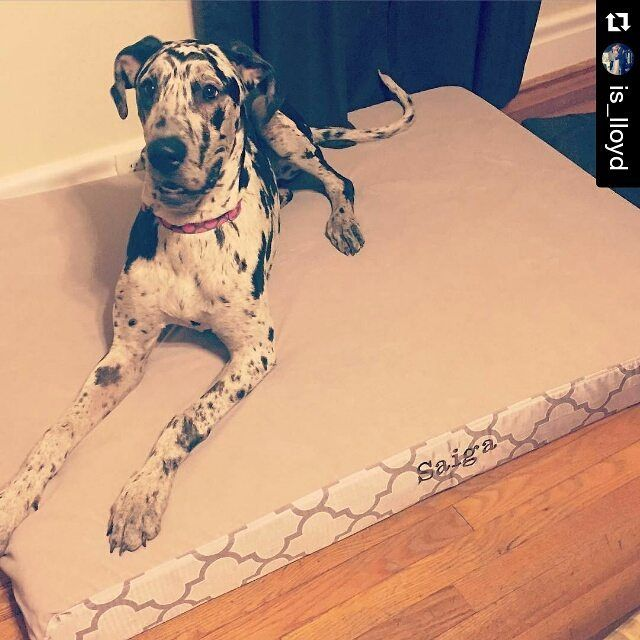 1000 Ideas About Xxl Dog Beds On Pinterest Orthopedic