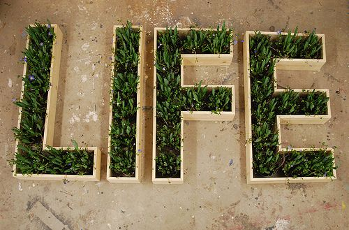 life is everywhere: Life Science, Cute Ideas, Typography Poster, Grass Life, Grass Typography, Cool Ideas, Planters Boxes, Life Plants, Beautiful Quotes