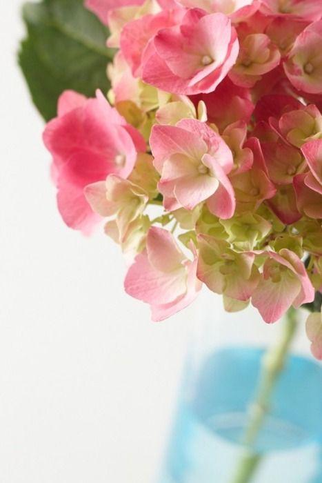 Fresh flowers via Crush Cul de Sac