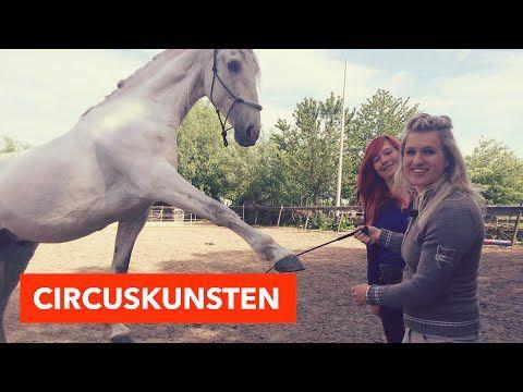 Circuskunsten en trucs | PaardenpraatTV - YouTube