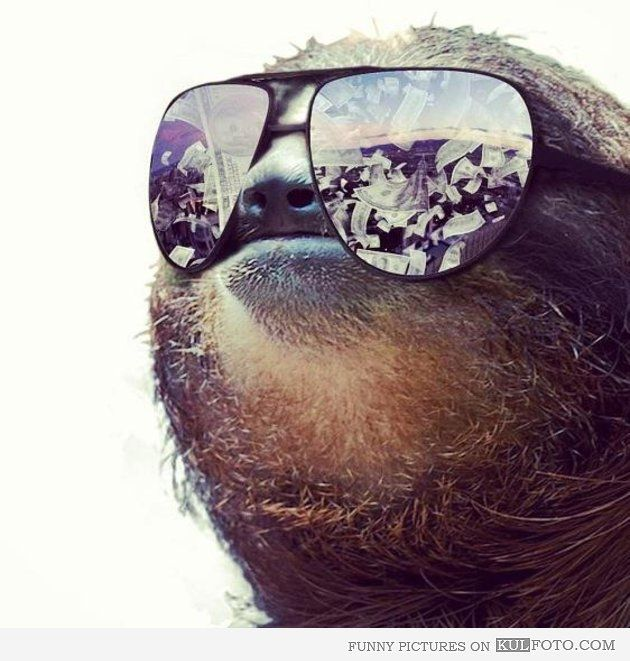 Sloth money dream - Funny sloth in mirrored sunglasses dreaming about money.