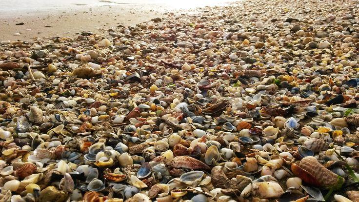 Beach of Nea Chili, Alexandroupolis, Evros, Greece .