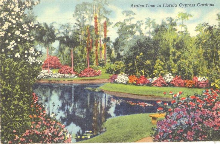 Vintage Florida Linen Postcard Azalea Time Cypress Gardens