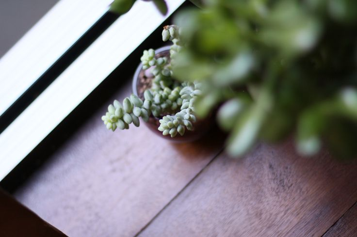 Succulents to green up the window bench.
