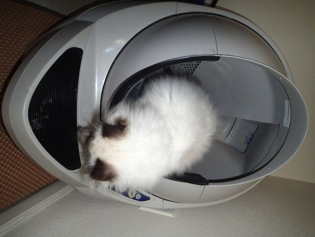 litter robot open air reader review check out our automatic self cleaning litter box review litter