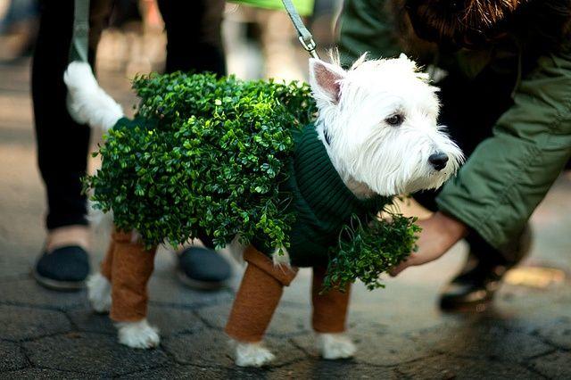 chia pet costume - be green