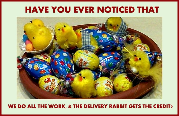 Who are you thanking for the #eggs? The #Easterrabbit  ? What about the #Easterchickens ?
