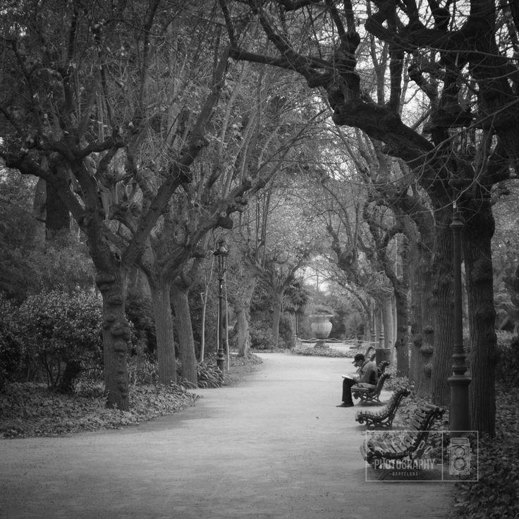 Solo en el parque - null