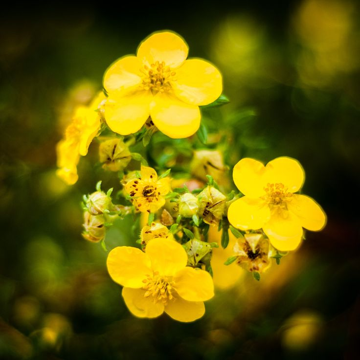 Yellow Autumn Flower - Fall is definitively upon us in Norway, but this cute yellow flower still holds on to the summer!