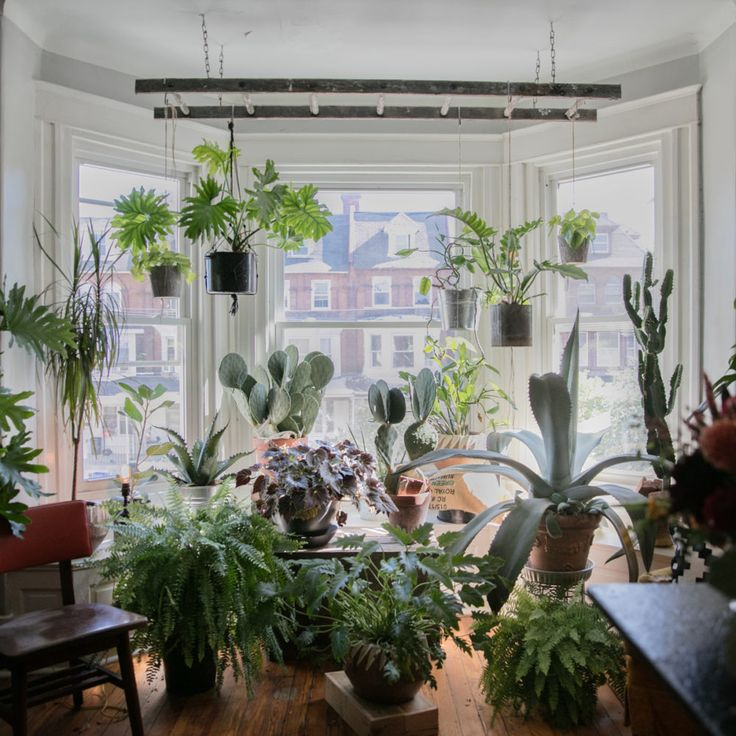 17 Best Images About Houseplants On Pinterest Gardens
