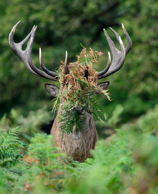These Are the 13 Funniest Wild Animal Photos of 2015  - CountryLiving.com