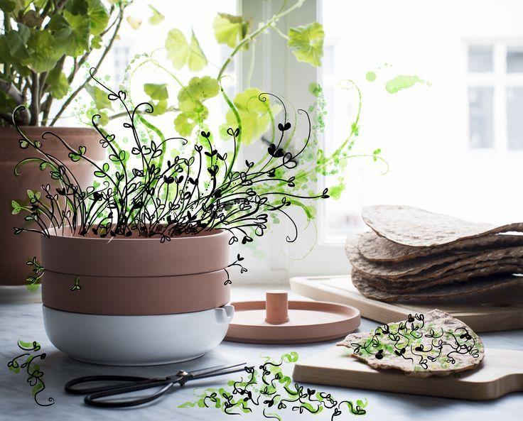 Eenvoudig thuis groente kweken kan met de ANVÄNDBAR kweekbak. | #nieuw #collectie #IKEA #IKEAnl #terracotta #duurzaam #kweken #groeien #planten #milieu #moestuin #kruiden #DagvandeDuurzaamheid