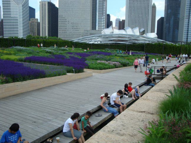 Lurie Garden Chicago,the Salvia River by Piet Oudolf