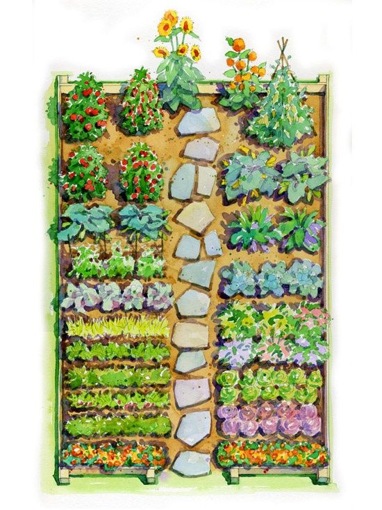 Garden plan watercolour garden plans pinterest for Kitchen vegetable garden plans