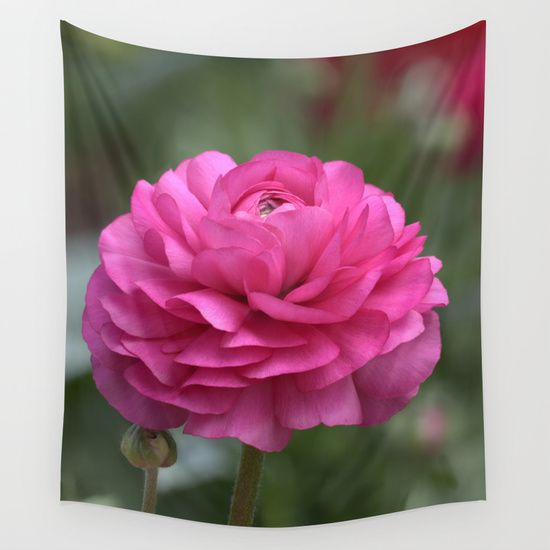 Ranunculus Pink.  Available on many other products