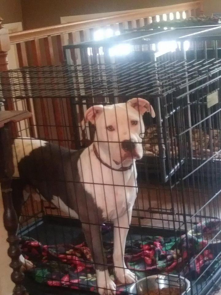 Adopt Valor On Dogs Dog Mom Shelter Dogs