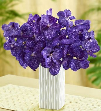 Purple Vanda Orchids   Let our subtly fragrant and intensely colorful Vanda orchids fill the day with exotic elegance and grace. Among the most beautiful and most popular of all orchid varieties, these premium blooms are known for their uniquely shaped blooms and long-lasting vase life.