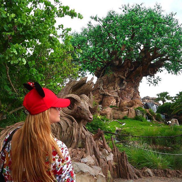 """""""La prima giornata in #Florida ? Non potevamo che trascorrerla nel divertentissimo Walt Disney World a Orlando.  La musica che ti accoglie appena varchi la soglia del Magic Kingdom ti proietta nel regno fatato della Disney e dei suoi personaggi.  In men che non si dica ritorni indietro nel tempo a quando eri bimbo... D'obbligo il cappello con le orecchie e... via verso le prime giostre, abbracciando nel percorso i più amati personaggi Disney ❤️❤️ Ringraziamo di cuore la @Walt Disney World…"""