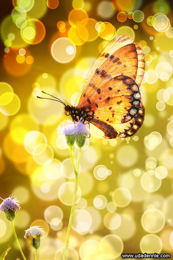 yellow brown . butterfly