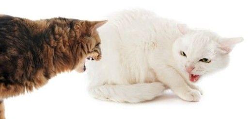 gatos-brigando-size-620