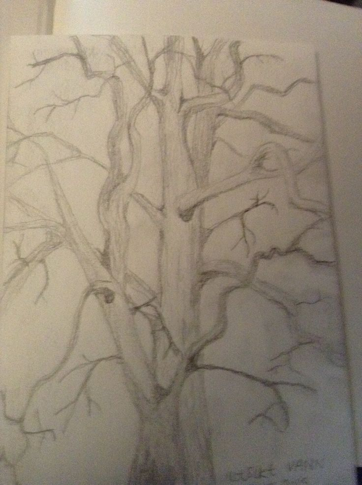 I am fascinated by trees