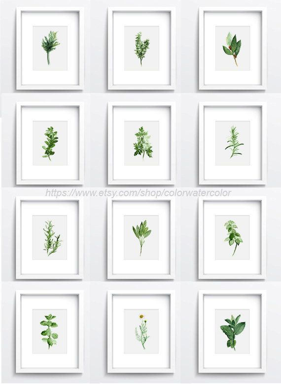Herbs Chart Set Of 12, Spices Wall Decor, Kitchen Art Print Giclee,  Botanical