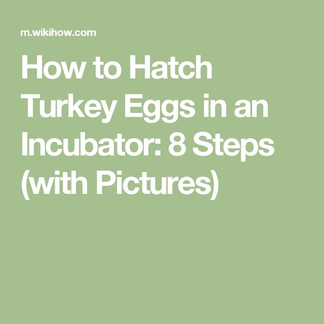 How to Hatch Turkey Eggs in an Incubator: 8 Steps (with Pictures)