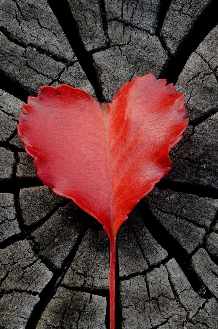 Leaf heart. by Karina Bezkrovnaia on 500px