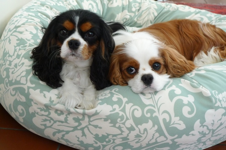 coco and spencer our favorite Cavaliers
