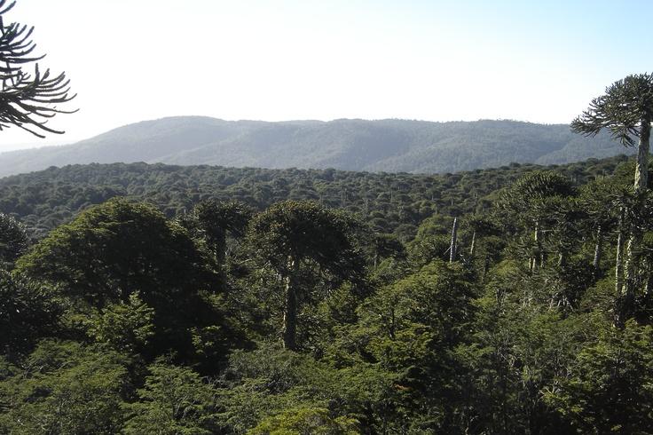 Vista panorámica del parque.