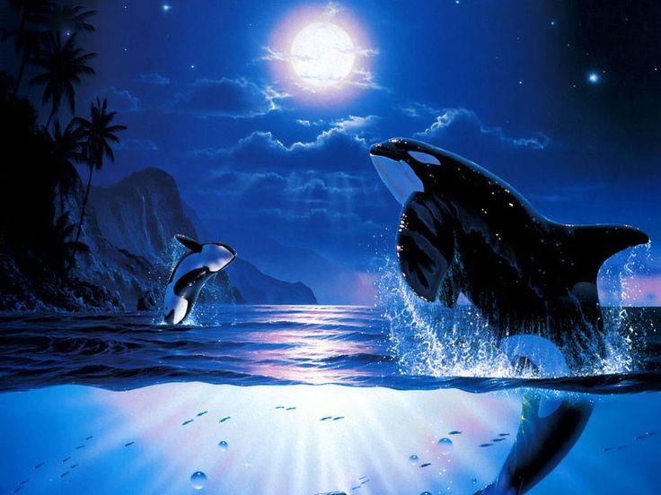 gratsi skrivebords bakgrunn photos - Delfiner: http://wallpapic-no.com/dyr/delfiner/wallpaper-30549