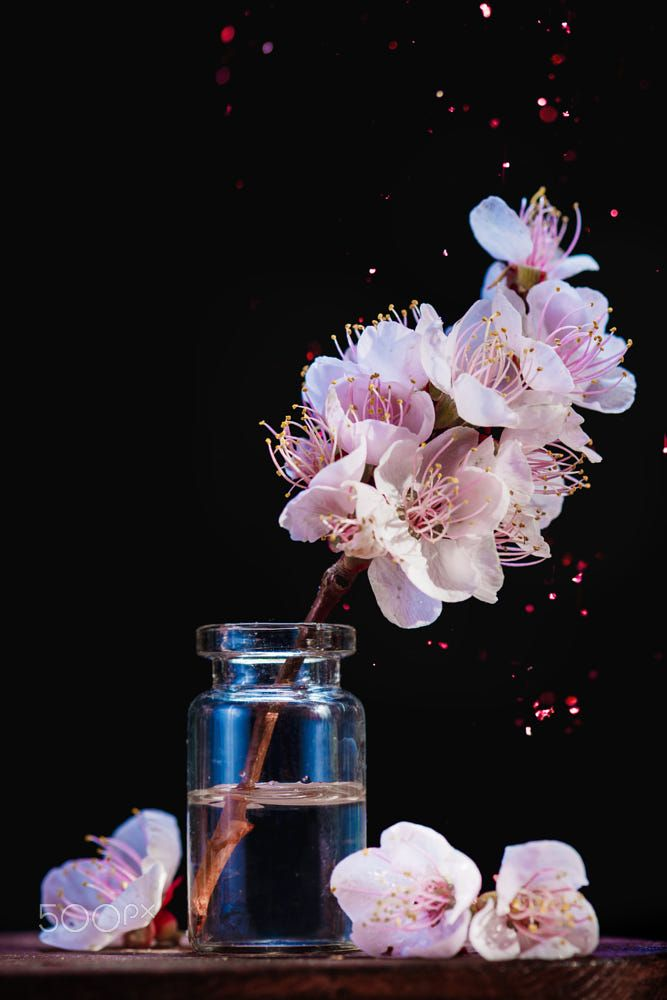 Spring Cherry Blossom In A Glass Jar On A Dark Background With Pink Sparkle Creati Cherry Blossom Wallpaper Pink Flowers Photography Cherry Blossom Background