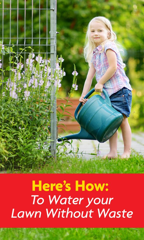 Do you want perfect green grass but are worried about wasting water? Water conservation is high on everyone's radar. We have a range of products and tips that will save water and still have your grass looking green!
