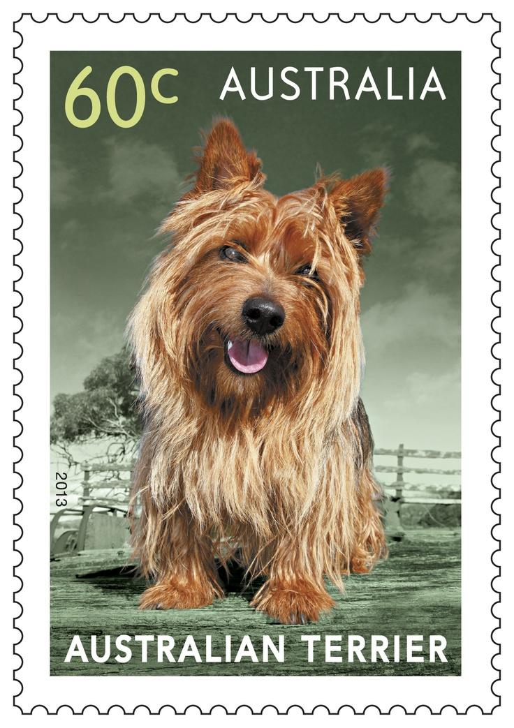 Tony el terrier australiano en nuestros perros del sello