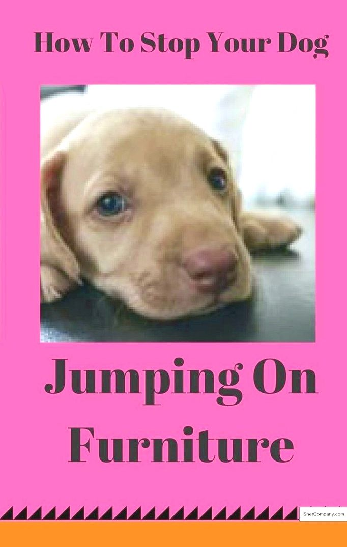 Dog Training Info Take Advantage Of The Appropriate Tone Of Voice