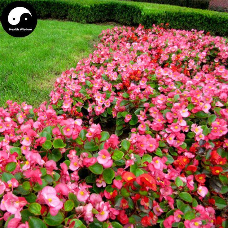 4 Steps To Successful Flower Gardening Flower Garden Design Flower Seeds Flower Seeds Online