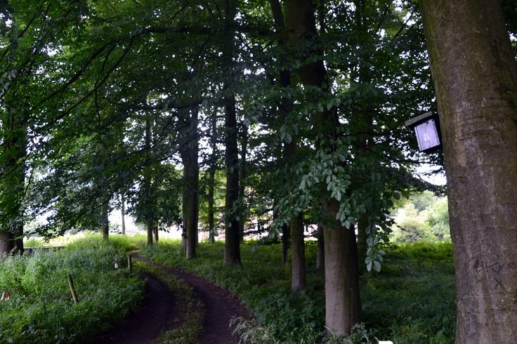 In Angerlo (gemeente Zevenaar), vlakbij de rivier de IJssel, ligt het Bingerdense Bos met een hoeveelheid aan oude bomen. Een aanrader voor natuur- en tuinliefhebbers. Het bos heeft een oppervlakte van zo'n 8 hectare en is tussen zonsopgang en zonsondergang opengesteld voor publiek. Er zijn verschillende fiets- en wandelroutes langs of door het Bingerdense bos.